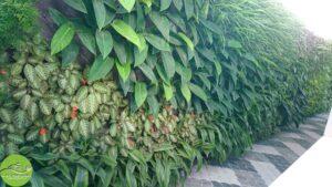 Gia Thịnh Hưng tường cây biệt thự tư gia