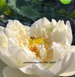 Gia Thịnh Hưng- Biệt thự Chị Phùng Anh, Khu Biệt Thự Đảo Nổi, Đà Nẵng 20