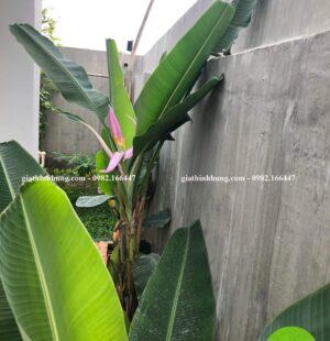 Gia Thịnh Hưng- Biệt thự Chị Phùng Anh, Khu Biệt Thự Đảo Nổi, Đà Nẵng 5