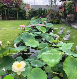 Gia Thịnh Hưng- Biệt thự Chị Phùng Anh, Khu Biệt Thự Đảo Nổi, Đà Nẵng 6
