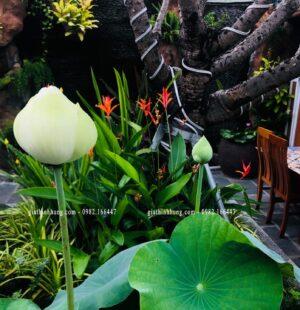 Gia Thinh Hung-Nhà hàng 다낭기와집 GIWAZIP 27 Nguyễn Chí Thanh, Đà Nẵng 6