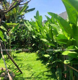 Biệt thực c Phùng Anh, Đảo Nổi, Đà Nẵng